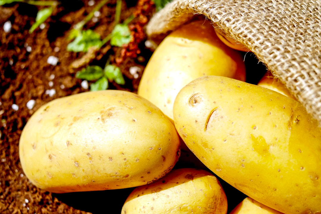 ¿Cuál es el origen de la patata?